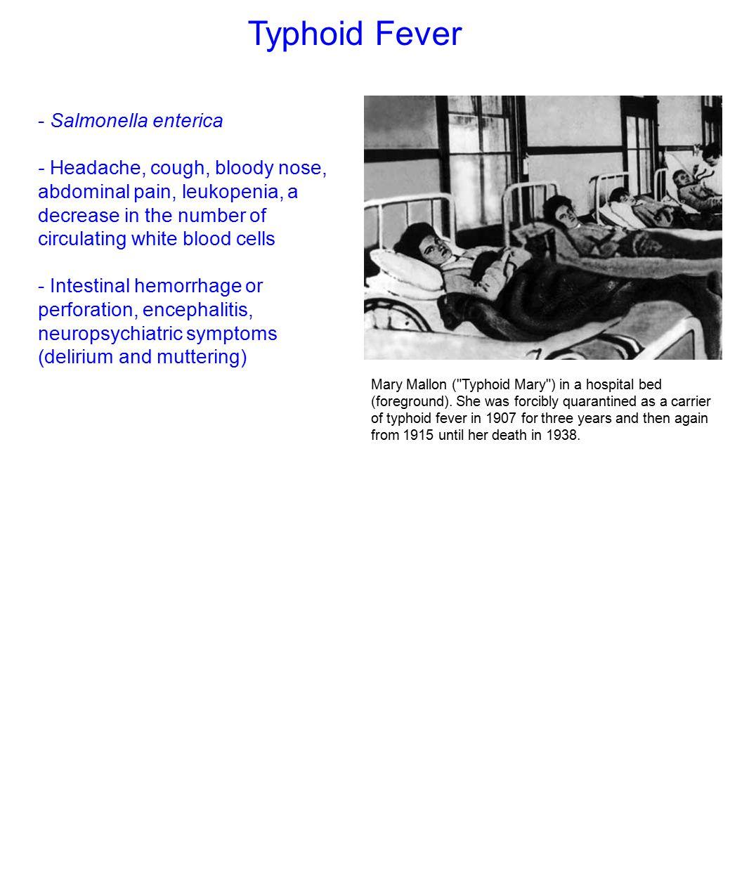 lipitor 80mg simvastatin 40mg hofh study