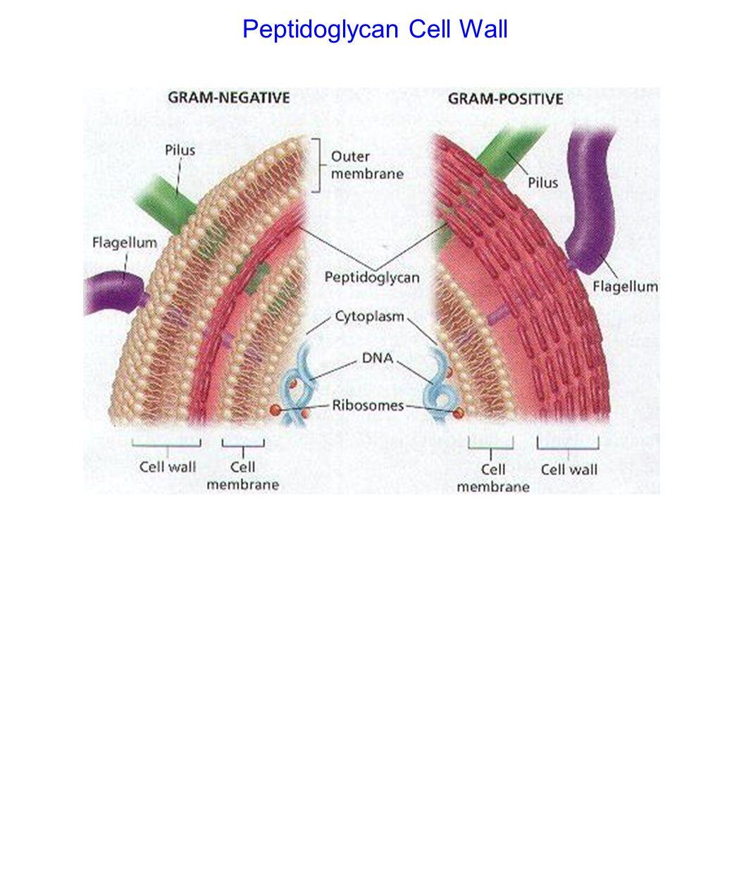 Parasites - Mechanical injury (ex.