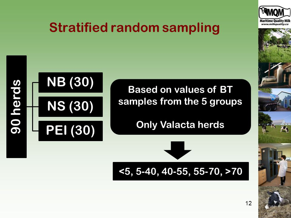 Stratified random sampling 90 herds NB (30) NS (30) PEI (30) 12 Based on values of BT samples from the 5 groups Only Valacta herds 70