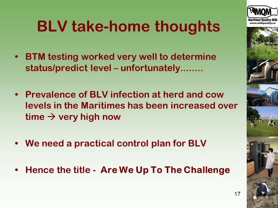 BLV take-home thoughts BTM testing worked very well to determine status/predict level – unfortunately........ Prevalence of BLV infection at herd and