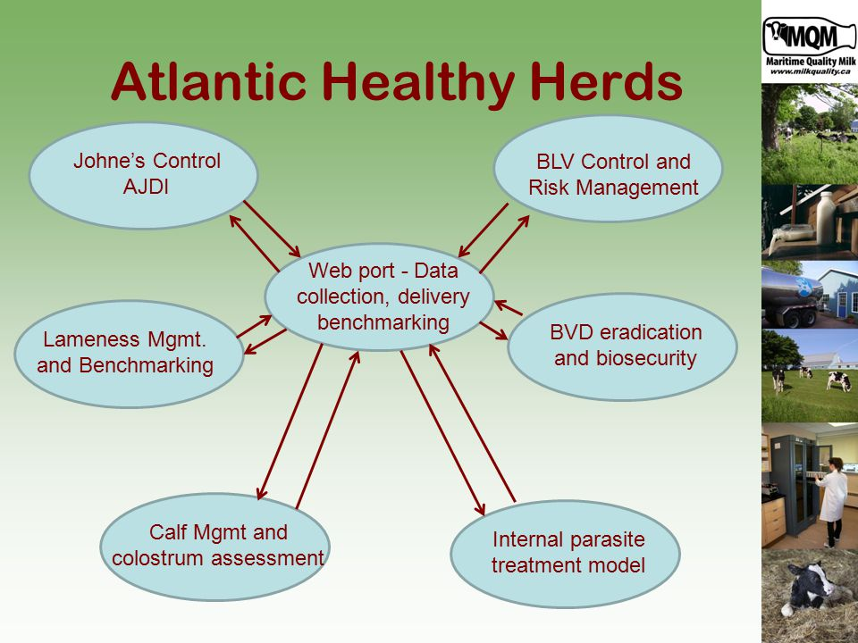 Atlantic Healthy Herds Johne's Control AJDI Calf Mgmt and colostrum assessment Internal parasite treatment model BLV Control and Risk Management BVD eradication and biosecurity Web port - Data collection, delivery benchmarking Lameness Mgmt.