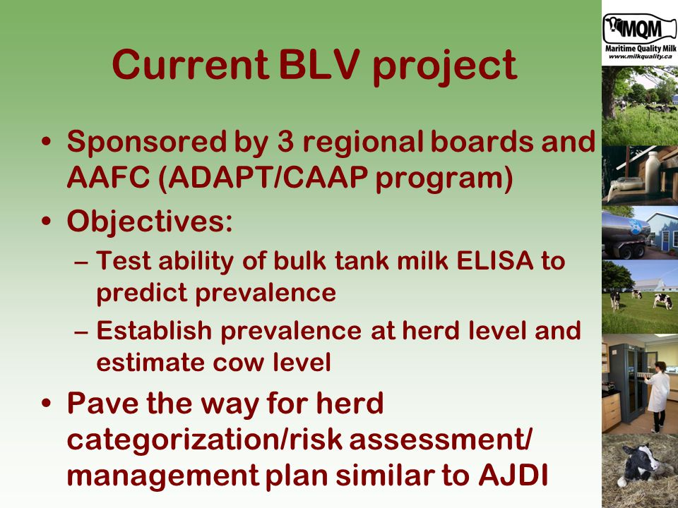 Current BLV project Sponsored by 3 regional boards and AAFC (ADAPT/CAAP program) Objectives: –Test ability of bulk tank milk ELISA to predict prevalence –Establish prevalence at herd level and estimate cow level Pave the way for herd categorization/risk assessment/ management plan similar to AJDI