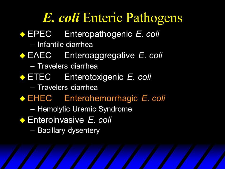 E. coli Enteric Pathogens u EPEC Enteropathogenic E. coli –Infantile diarrhea u EAECEnteroaggregative E. coli –Travelers diarrhea u ETECEnterotoxigeni