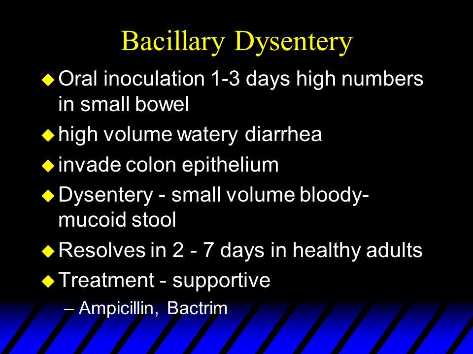 Bacillary Dysentery u Oral inoculation 1-3 days high numbers in small bowel u high volume watery diarrhea u invade colon epithelium u Dysentery - smal