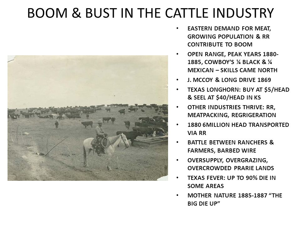 BOOM & BUST IN THE CATTLE INDUSTRY EASTERN DEMAND FOR MEAT, GROWING POPULATION & RR CONTRIBUTE TO BOOM OPEN RANGE, PEAK YEARS 1880- 1885, COWBOY'S ¼ B