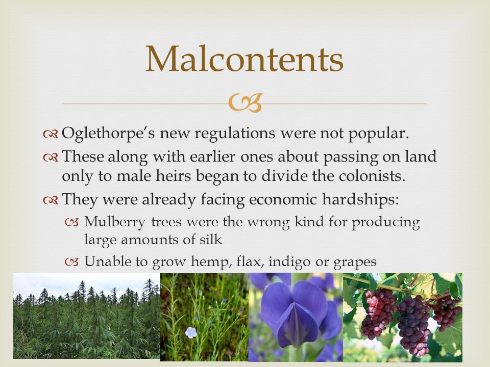   Oglethorpe's new regulations were not popular.  These along with earlier ones about passing on land only to male heirs began to divide the coloni