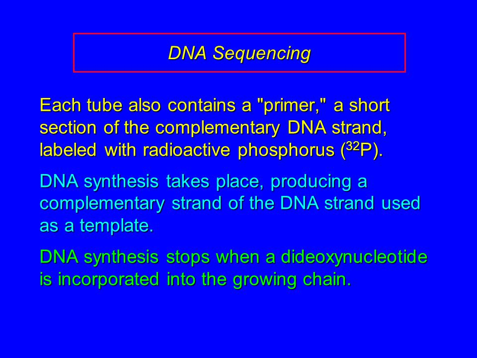 DNA Sequencing Each tube also contains a primer, a short section of the complementary DNA strand, labeled with radioactive phosphorus ( 32 P).