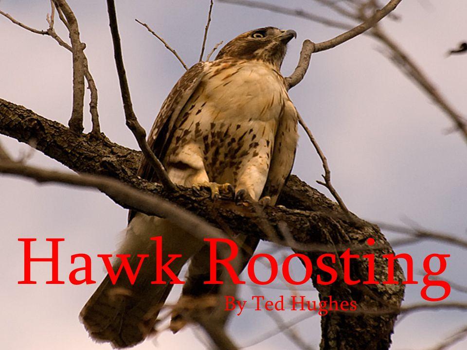 Hawk Roosting By Ted Hughes