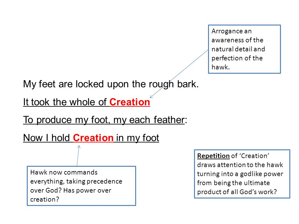 My feet are locked upon the rough bark. It took the whole of Creation To produce my foot, my each feather: Now I hold Creation in my foot Repetition o