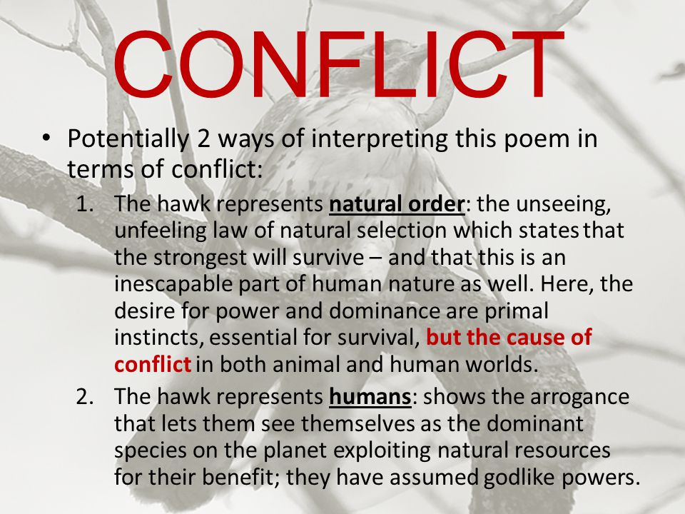 CONFLICT Potentially 2 ways of interpreting this poem in terms of conflict: 1.The hawk represents natural order: the unseeing, unfeeling law of natura