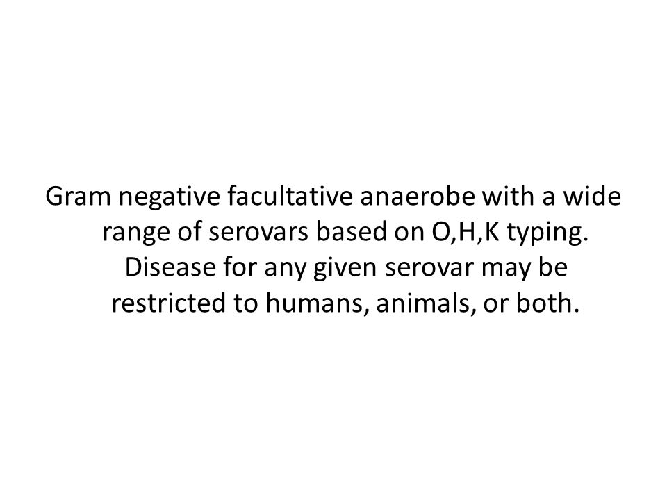 Gram negative facultative anaerobe with a wide range of serovars based on O,H,K typing.