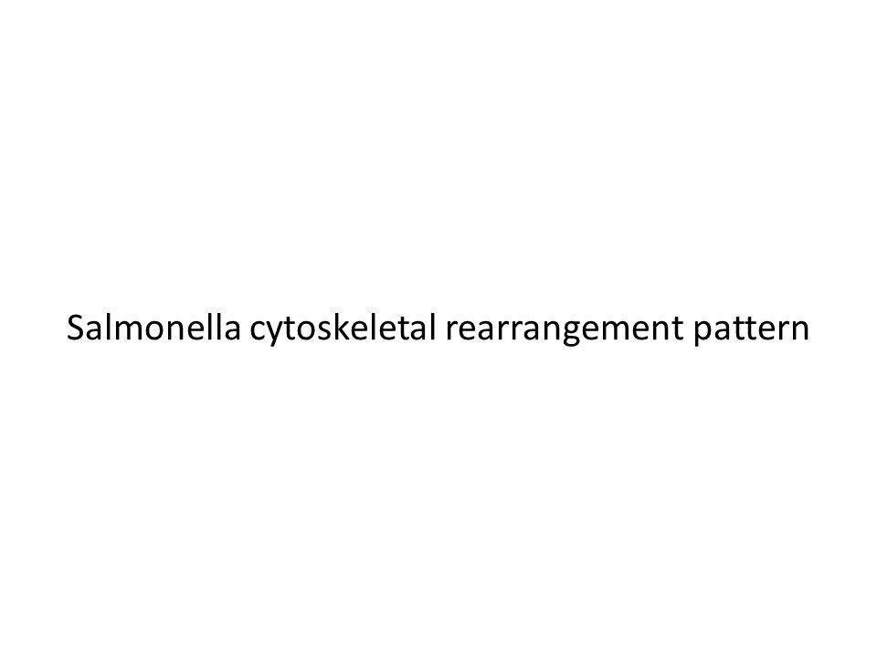 Salmonella cytoskeletal rearrangement pattern