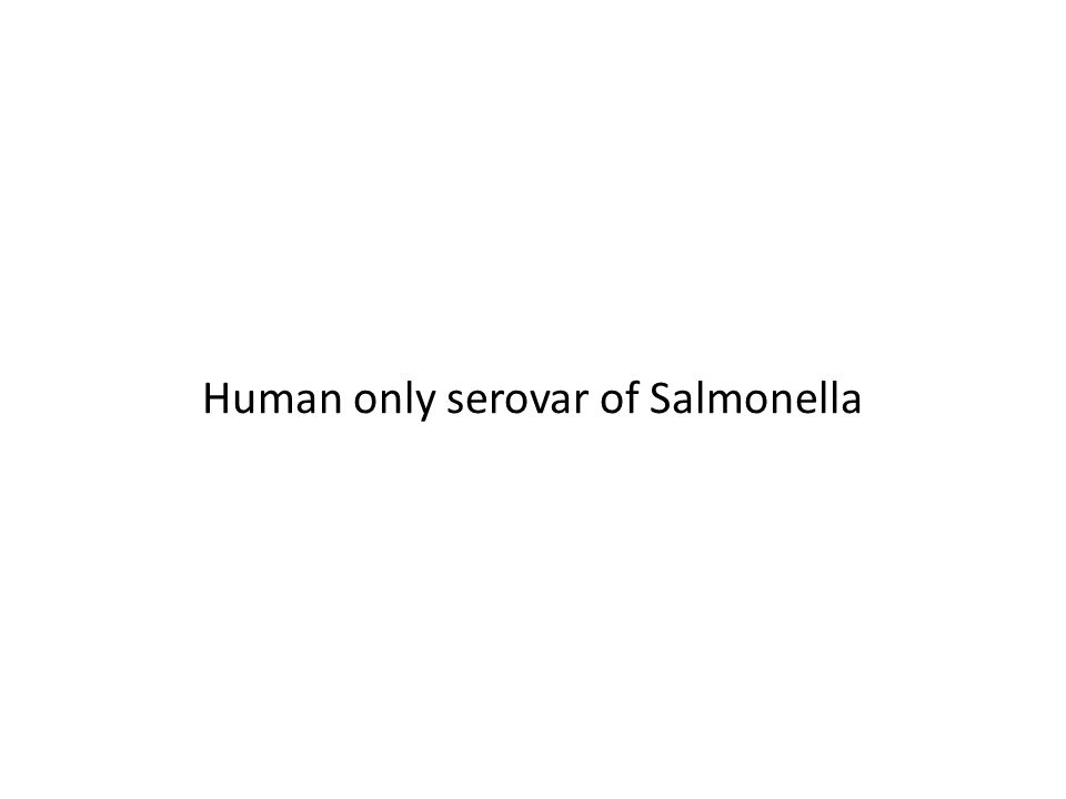 Human only serovar of Salmonella