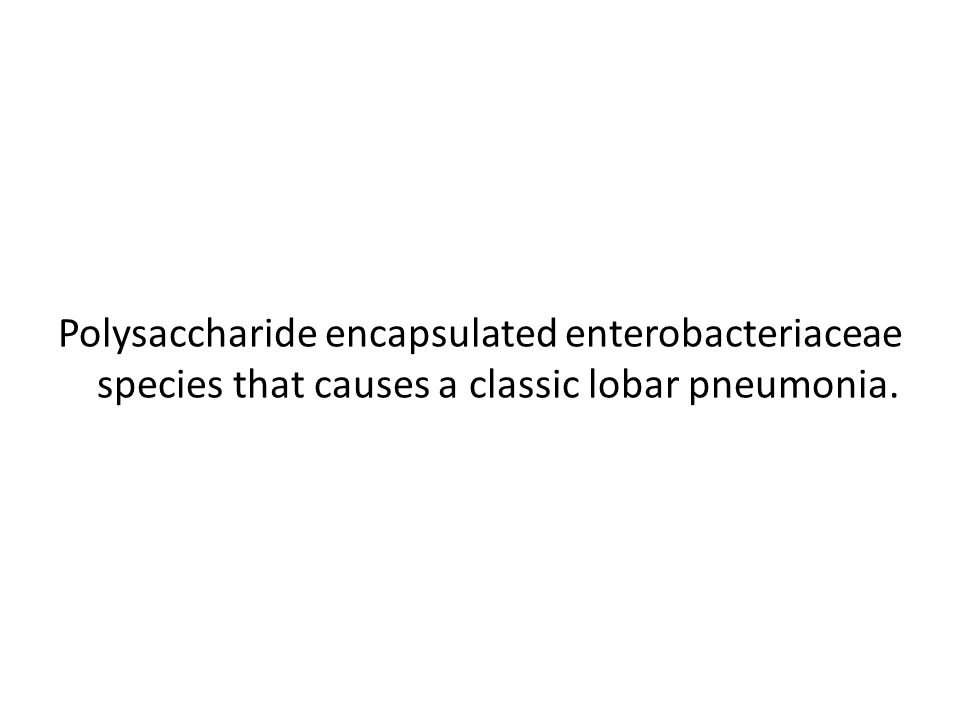 Polysaccharide encapsulated enterobacteriaceae species that causes a classic lobar pneumonia.
