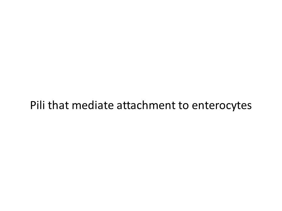 Pili that mediate attachment to enterocytes