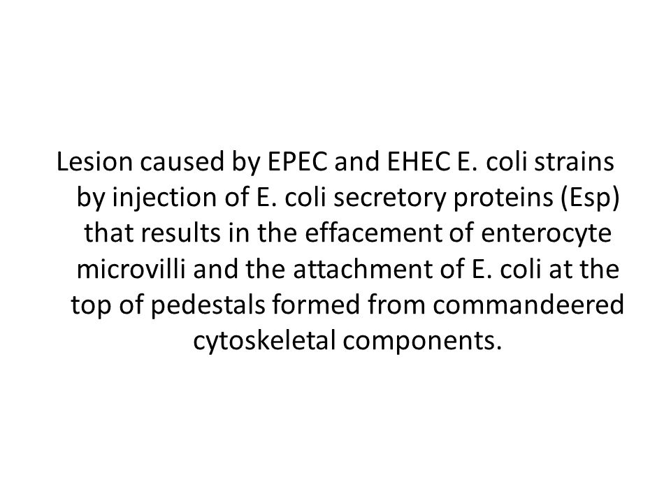 Lesion caused by EPEC and EHEC E.coli strains by injection of E.