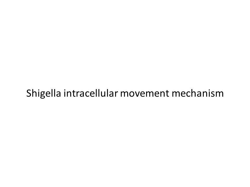 Shigella intracellular movement mechanism