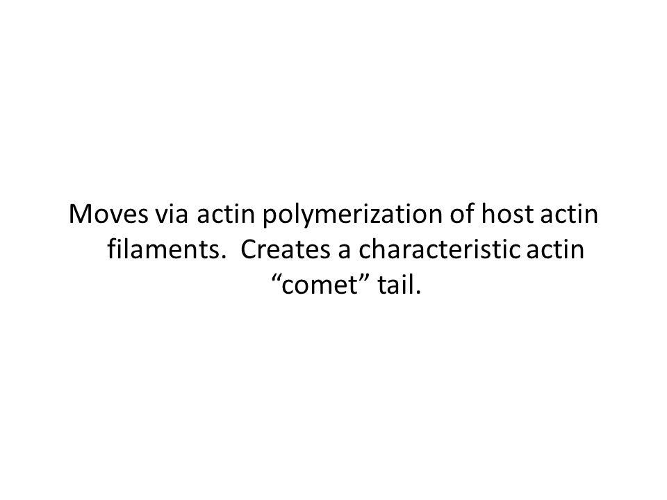 "Moves via actin polymerization of host actin filaments. Creates a characteristic actin ""comet"" tail."