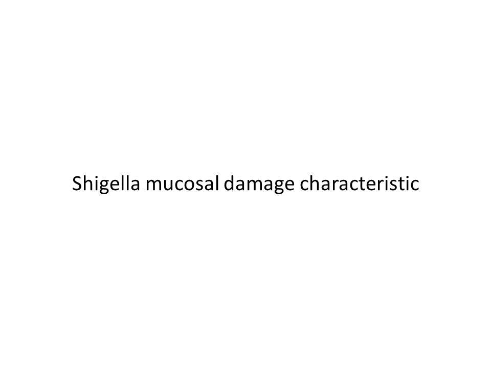 Shigella mucosal damage characteristic