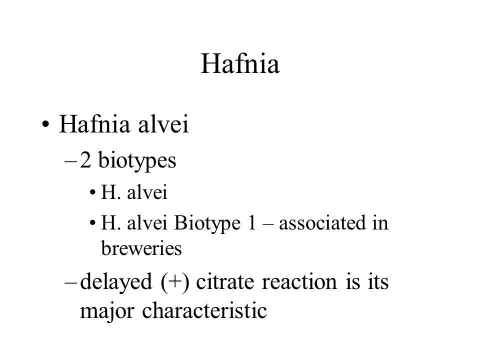 Hafnia Hafnia alvei –2 biotypes H. alvei H.