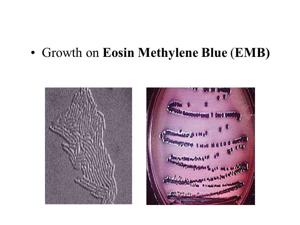 Growth on Eosin Methylene Blue (EMB)