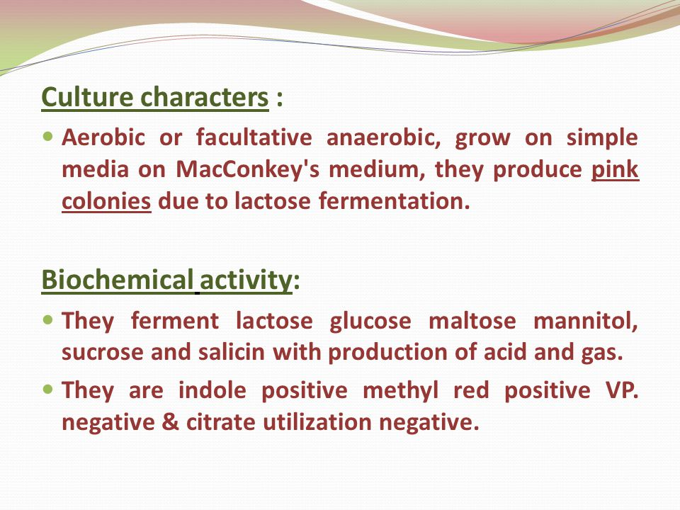 Culture characters : Aerobic or facultative anaerobic, grow on simple media on MacConkey s medium, they produce pink colonies due to lactose fermentation.