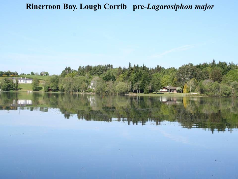 Rinerroon Bay, Lough Corrib pre-Lagarosiphon major
