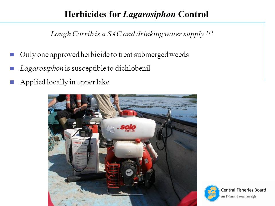 Herbicides for Lagarosiphon Control Lough Corrib is a SAC and drinking water supply !!.