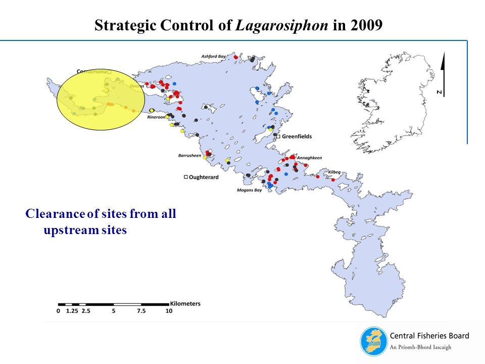 Strategic Control of Lagarosiphon in 2009 Clearance of sites from all upstream sites