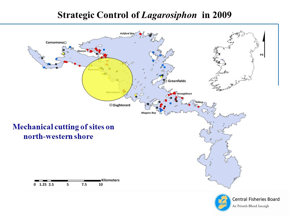 Strategic Control of Lagarosiphon in 2009 Mechanical cutting of sites on north-western shore