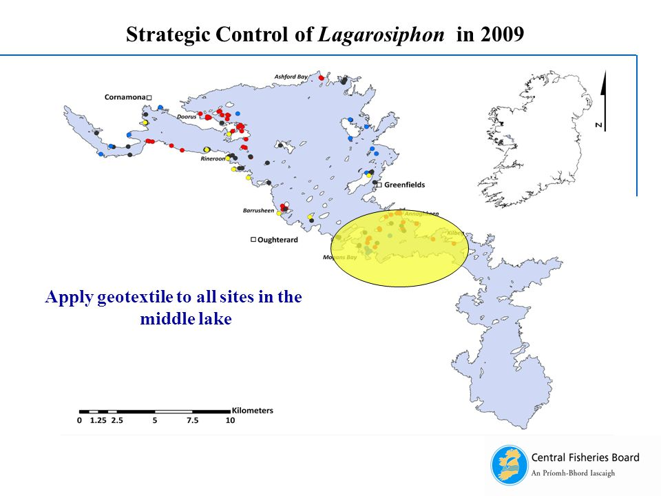 Strategic Control of Lagarosiphon in 2009 Apply geotextile to all sites in the middle lake