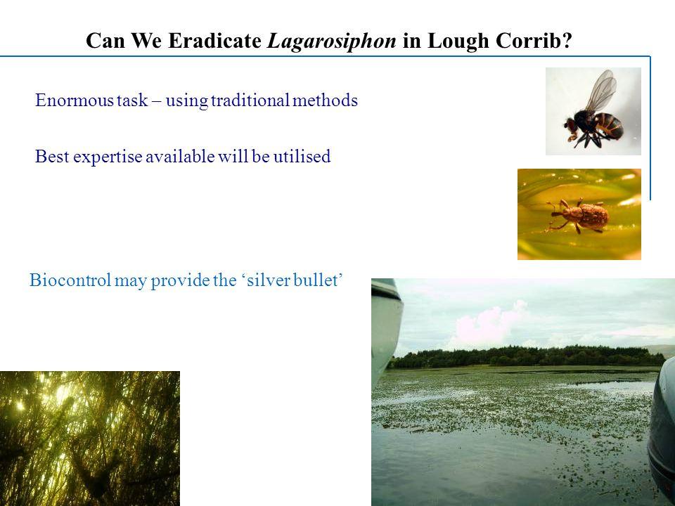 Can We Eradicate Lagarosiphon in Lough Corrib.