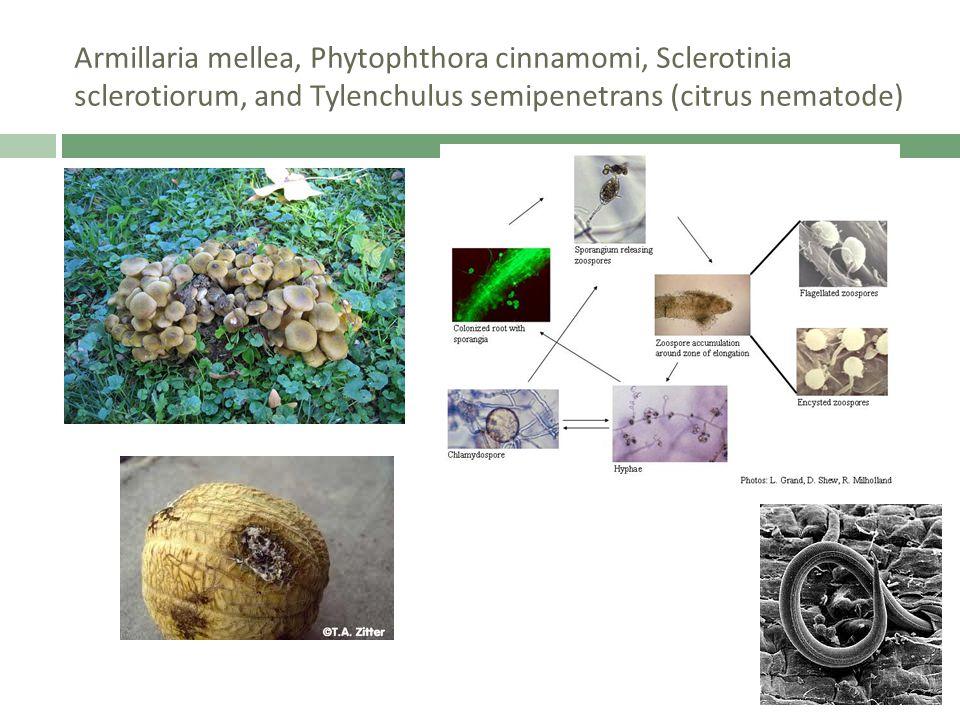 Armillaria mellea, Phytophthora cinnamomi, Sclerotinia sclerotiorum, and Tylenchulus semipenetrans (citrus nematode)
