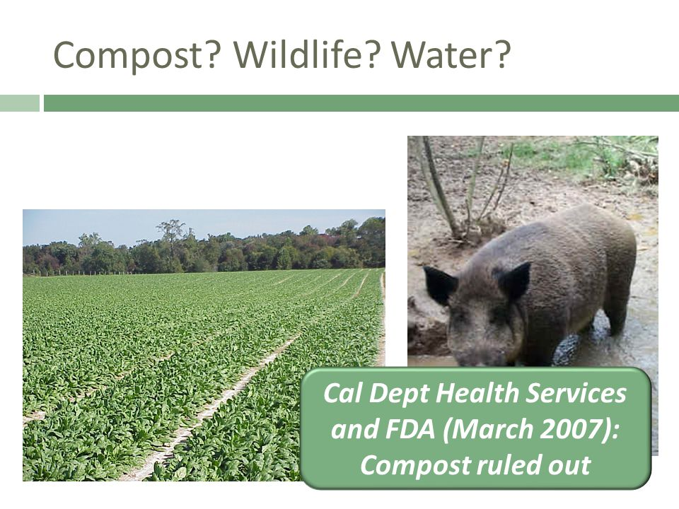 Compost? Wildlife? Water? Cal Dept Health Services and FDA (March 2007): Compost ruled out