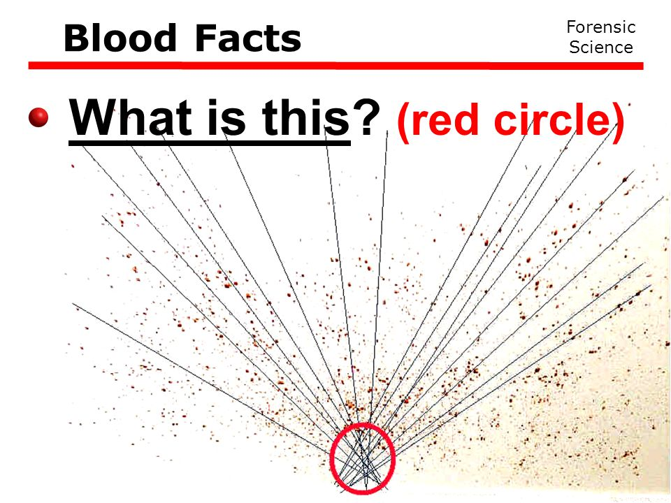 What is this (red circle) Forensic Science Blood Facts