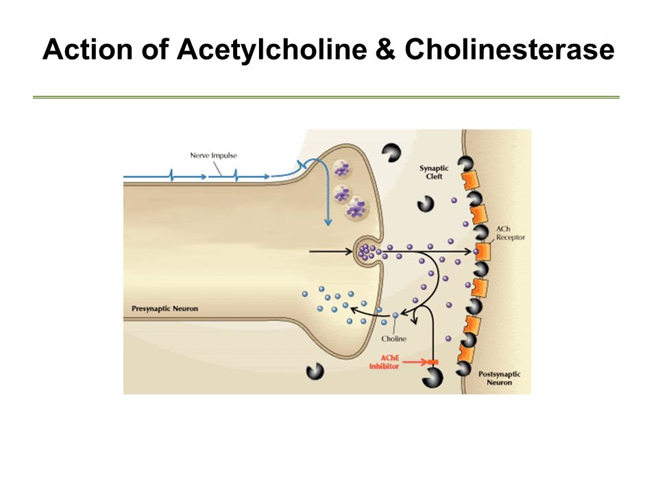 Action of Acetylcholine & Cholinesterase