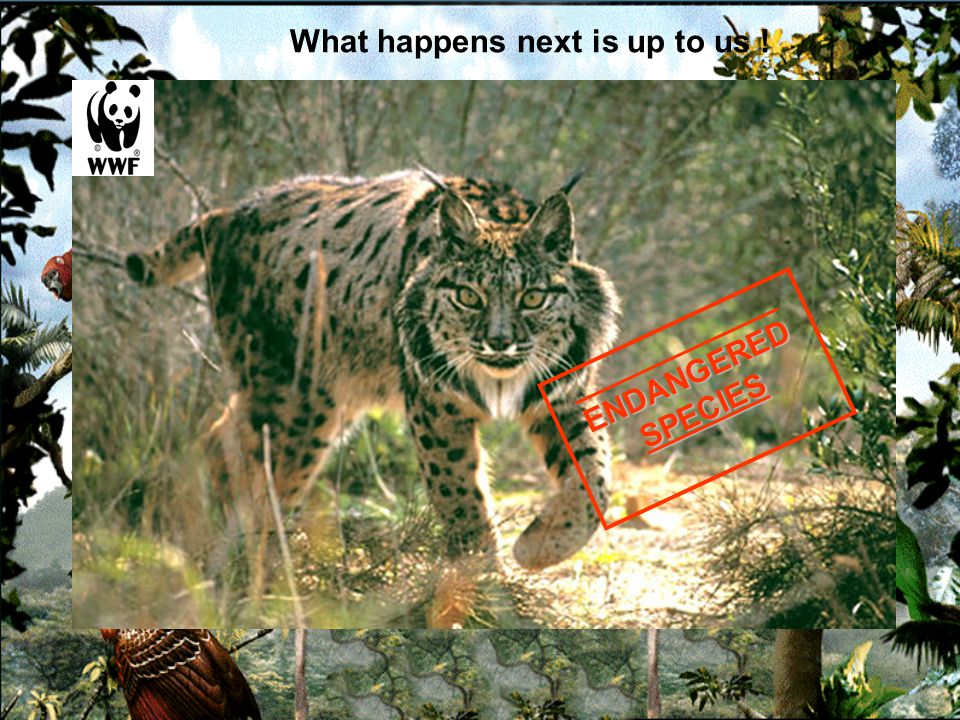 _________________ENDANGEREDSPECIES Protect Endangered Species
