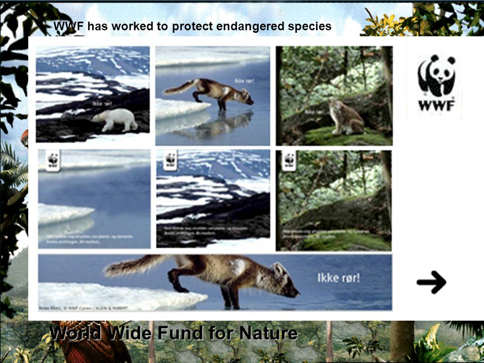 World Wide Fund for Nature WWF has worked to protect endangered species