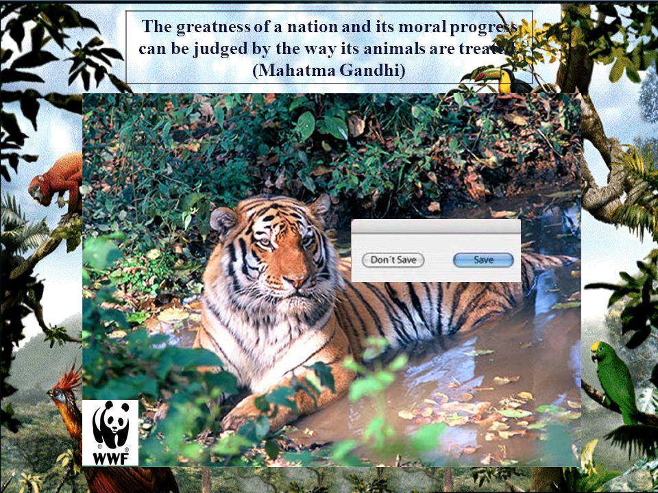 _________________ENDANGEREDSPECIES Last chance for animals