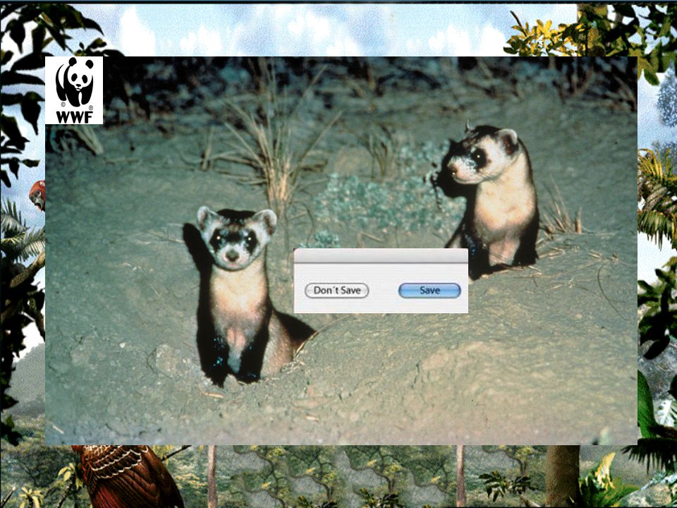 _________________ENDANGEREDSPECIES Help wildlife, to recover !