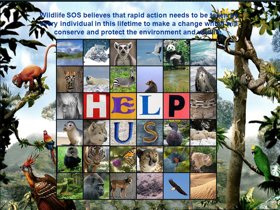Wildlife SOS believes that rapid action needs to be taken by every individual in this lifetime to make a change which will conserve and protect the environment and wildlife.