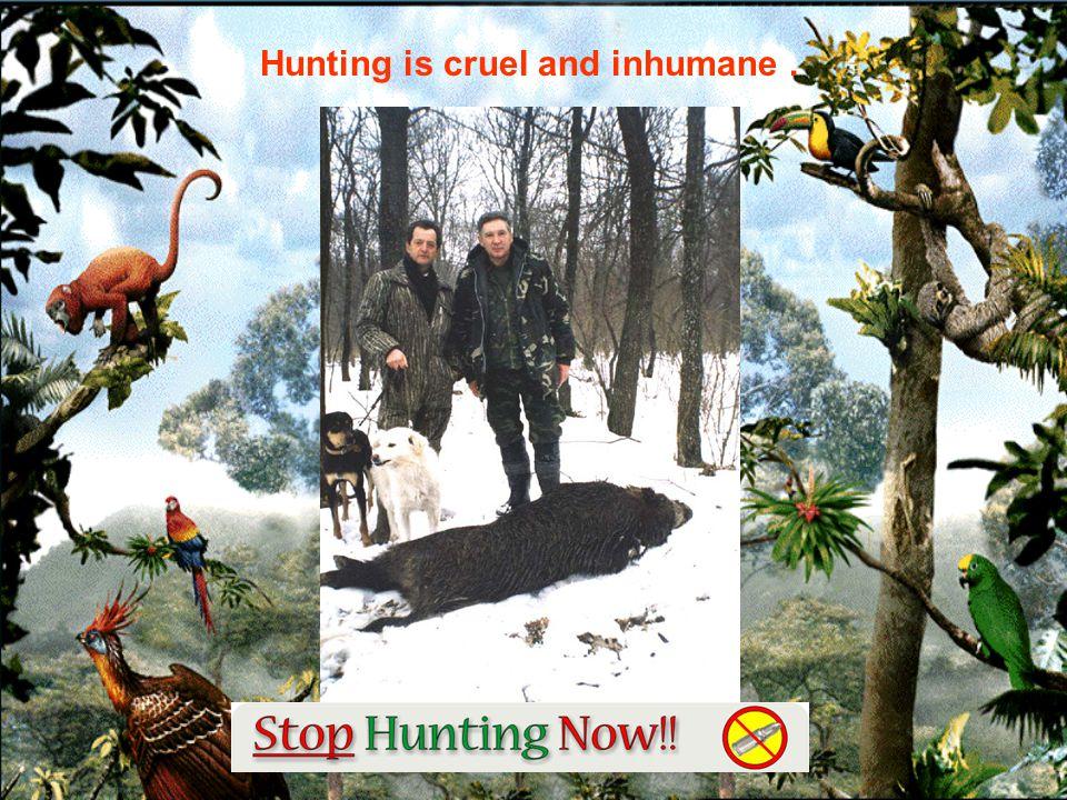 STOP ANIMAL SACRIFICES FOR OUR ENJOYMENT !!!