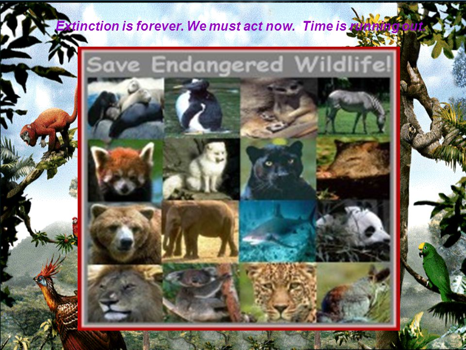 SAVE WILDLIFE !!.For a living planet .