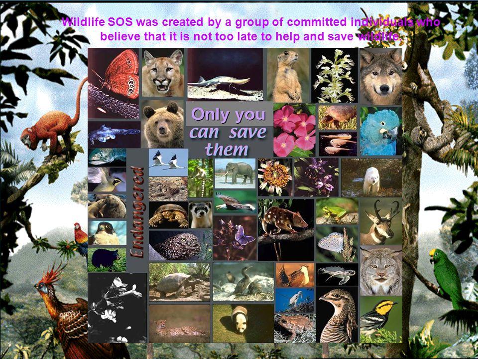 Saving and preserving the world s most endangered wildlife. _________________ENDANGEREDSPECIES