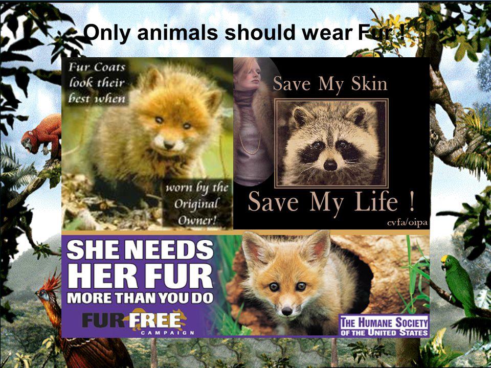Fur kills. Stop the cruelty !