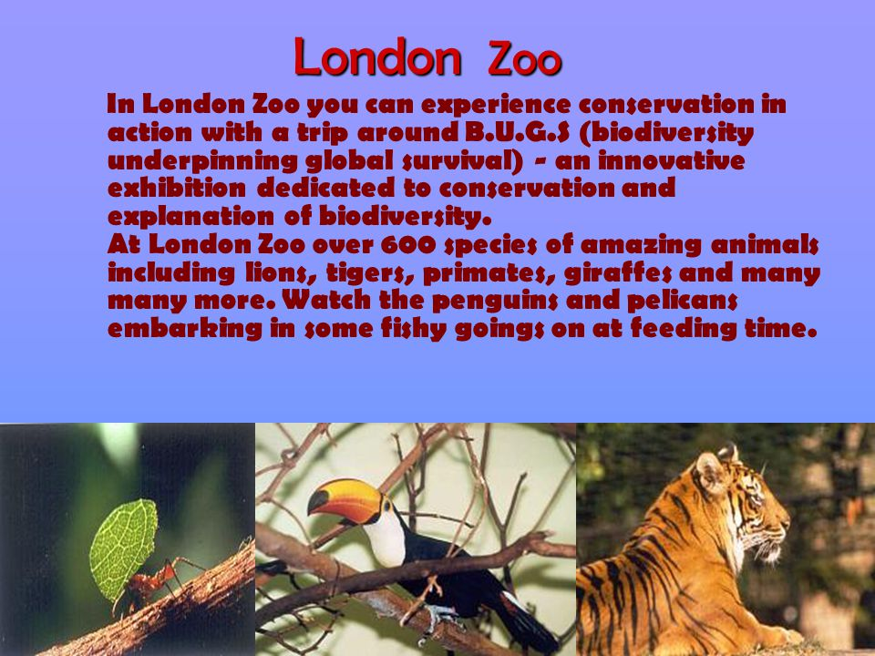 London Zoo In London Zoo you can experience conservation in action with a trip around B.U.G.S (biodiversity underpinning global survival) - an innovat