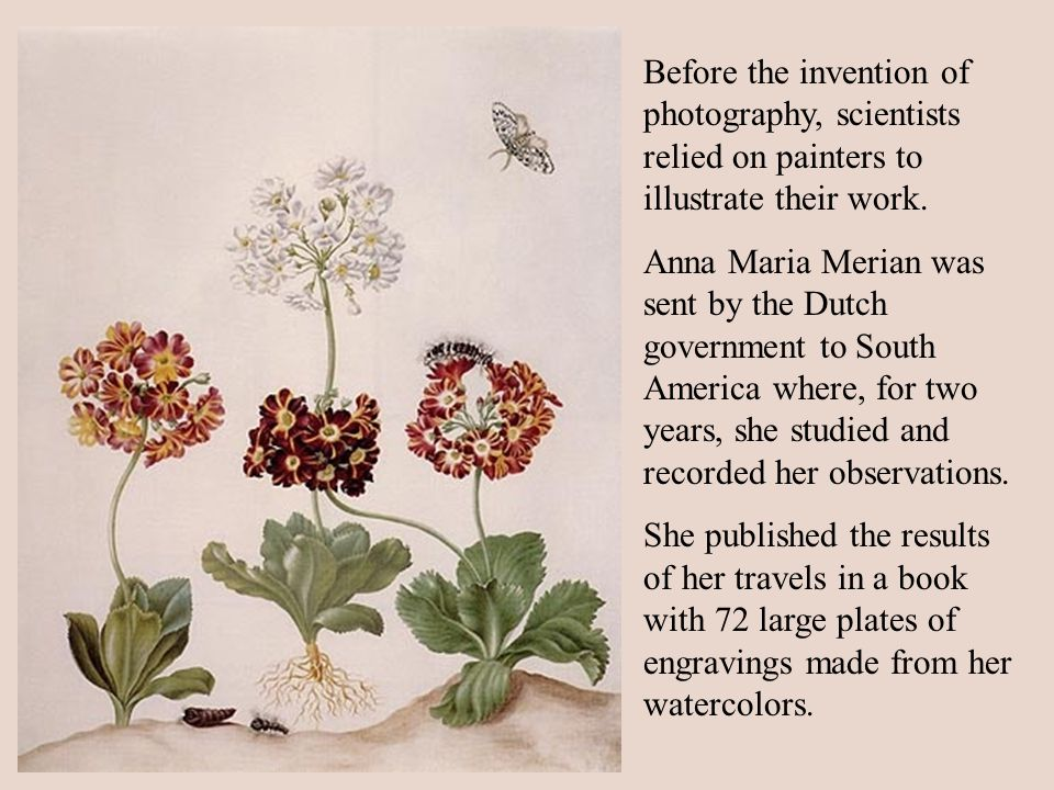Before the invention of photography, scientists relied on painters to illustrate their work. Anna Maria Merian was sent by the Dutch government to Sou