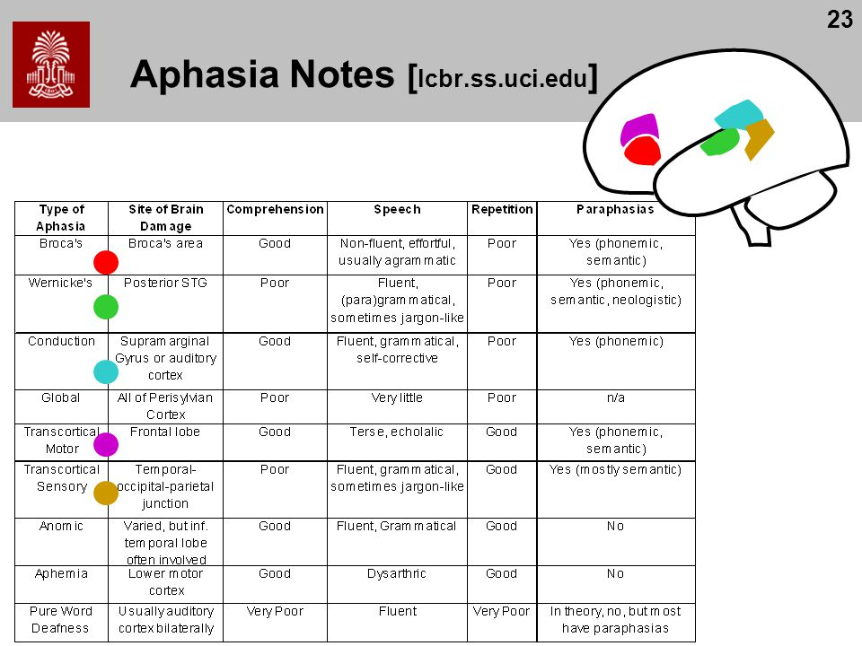 23 Aphasia Notes [ lcbr.ss.uci.edu ]