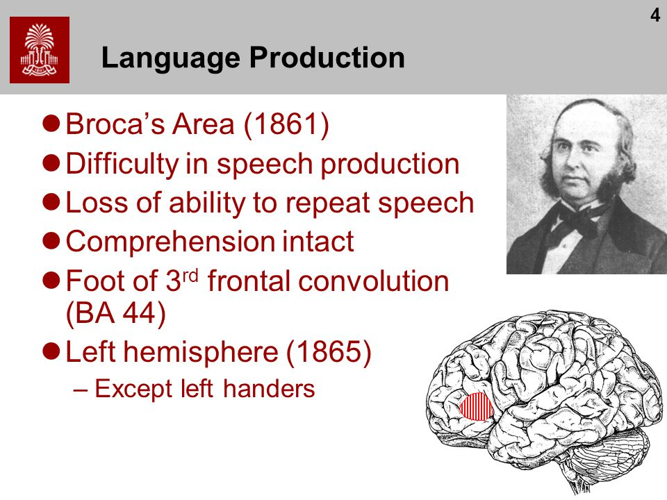 4 Language Production Broca's Area (1861) Difficulty in speech production Loss of ability to repeat speech Comprehension intact Foot of 3 rd frontal convolution (BA 44) Left hemisphere (1865) –Except left handers