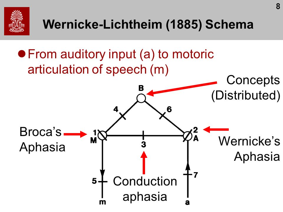 8 Wernicke-Lichtheim (1885) Schema From auditory input (a) to motoric articulation of speech (m) Broca's Aphasia Wernicke's Aphasia Concepts (Distribu